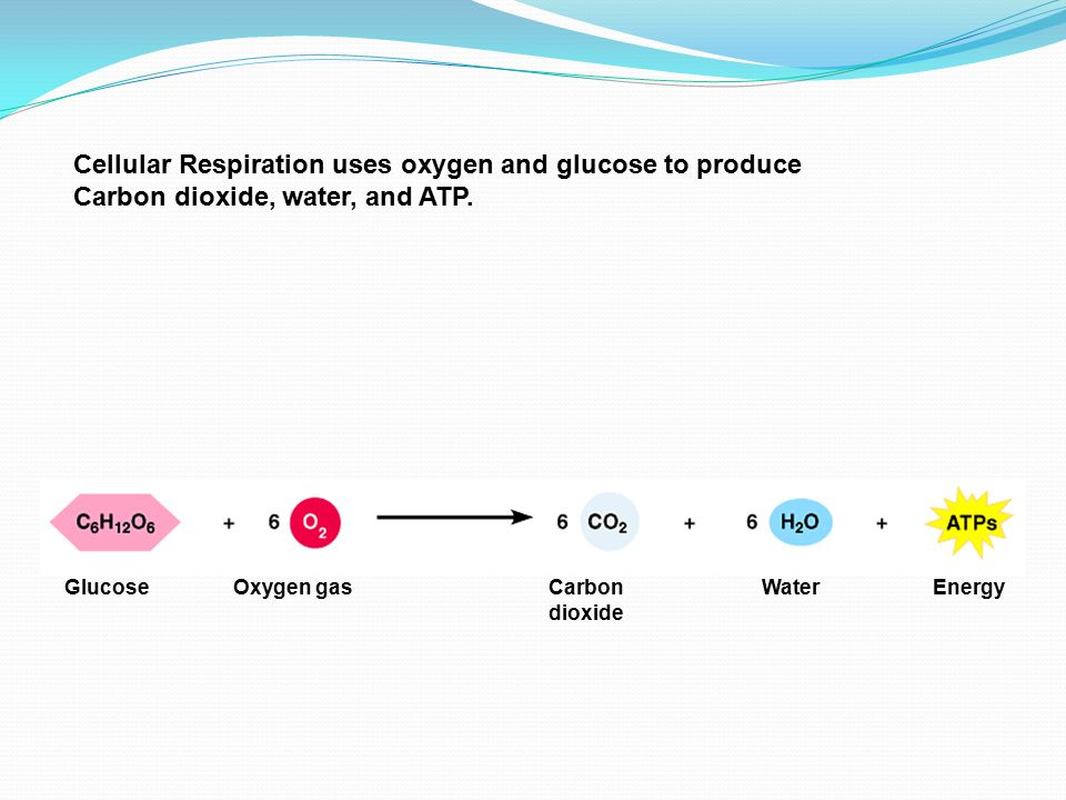 Cellular Respiration uses oxygen and glucose to produce