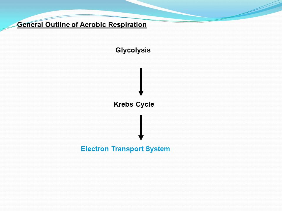 General Outline of Aerobic Respiration