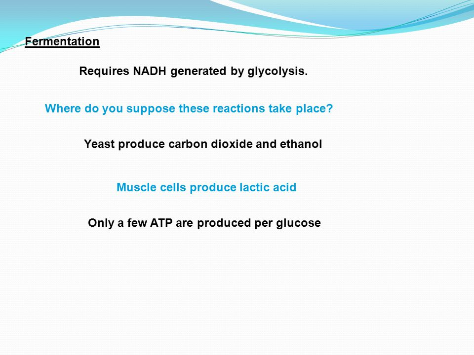 Fermentation Requires NADH generated by glycolysis. Where do you suppose these reactions take place