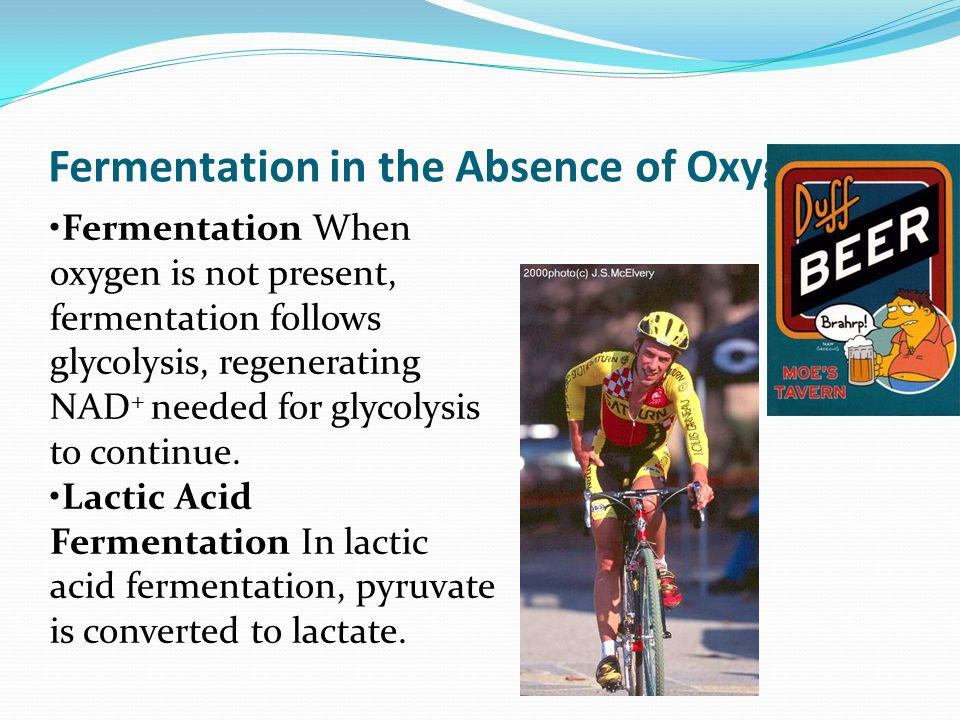 Fermentation in the Absence of Oxygen