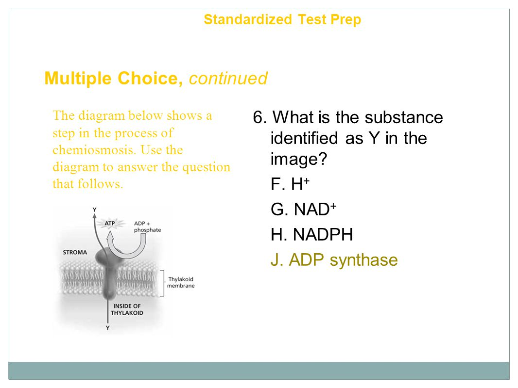 Chapter 6 Multiple Choice, continued