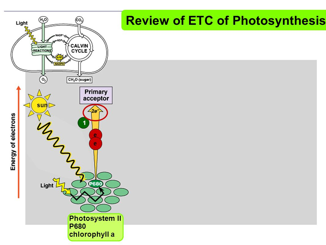 Review of ETC of Photosynthesis