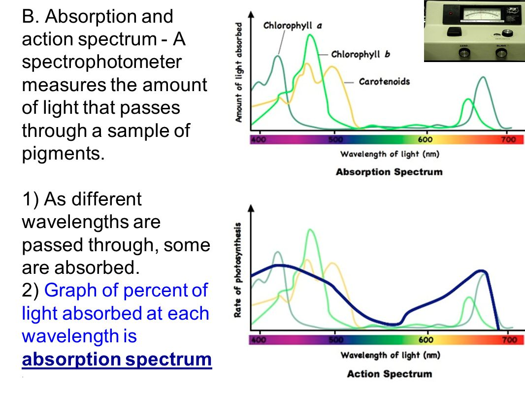 B. Absorption and action spectrum - A spectrophotometer measures the amount of light that passes through a sample of pigments. 1) As different wavelengths are passed through, some are absorbed. 2) Graph of percent of light absorbed at each wavelength is absorption spectrum