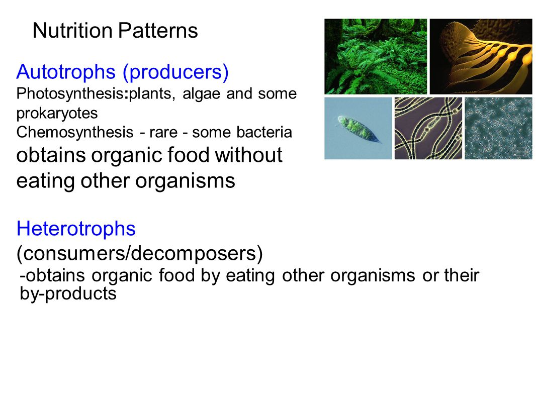 obtains organic food without eating other organisms