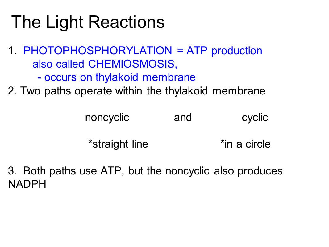 The Light Reactions 1. PHOTOPHOSPHORYLATION = ATP production