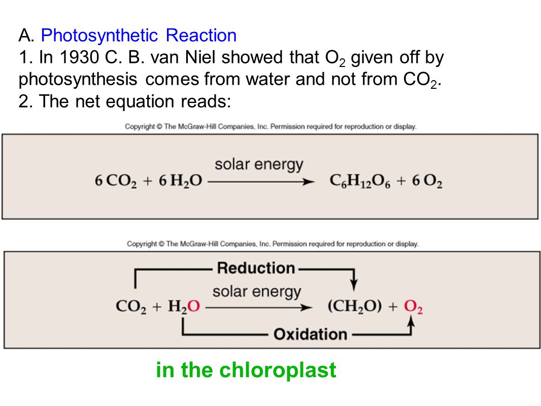 6H2O + 6CO2 C6H12O6 + 6O2 light oxygen Water + in the chloroplast