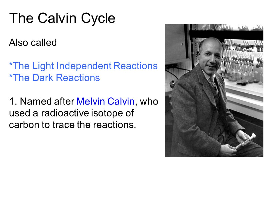The Calvin Cycle Also called *The Light Independent Reactions