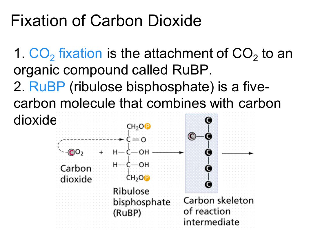 Fixation of Carbon Dioxide