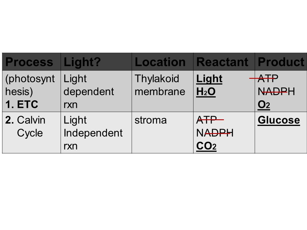 Process Light Location Reactant Product (photosynthesis) 1. ETC