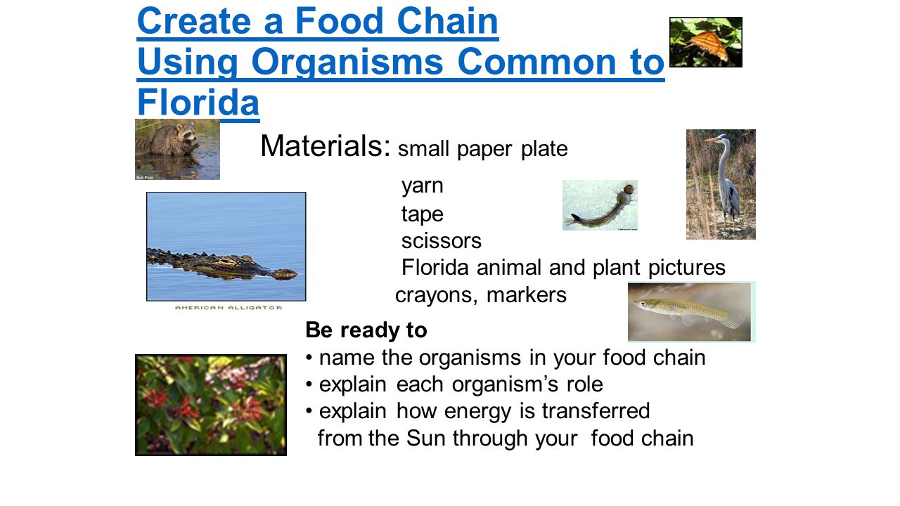how plants make your own food Food manufacturing process in green plants how do plants get their water and  nutrients absorption by the roots why is water important to plant growth.