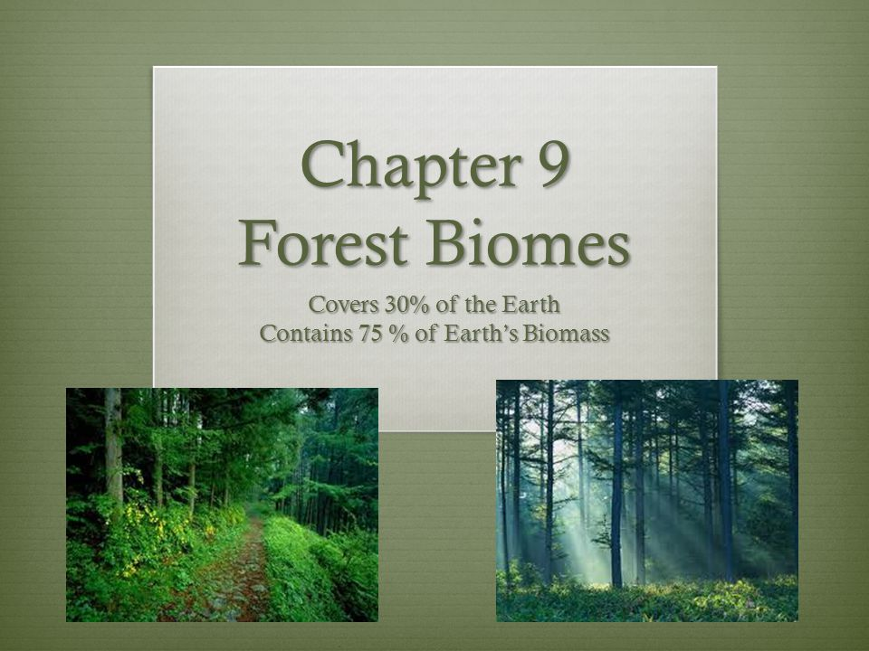 Covers 30% of the Earth Contains 75 % of Earth's Biomass