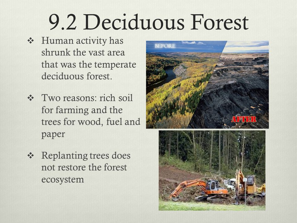 9.2 Deciduous Forest Human activity has shrunk the vast area that was the temperate deciduous forest.