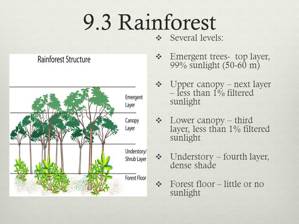 9.3 Rainforest Several levels: