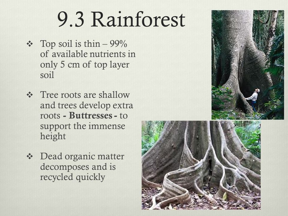 9.3 Rainforest Top soil is thin – 99% of available nutrients in only 5 cm of top layer soil.
