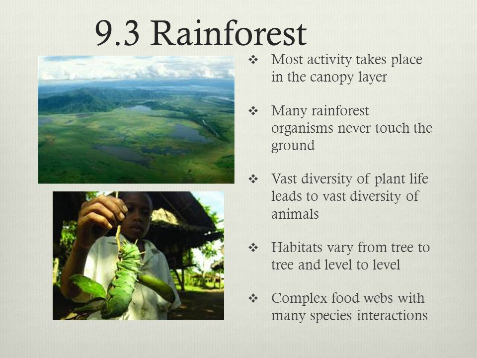 9.3 Rainforest Most activity takes place in the canopy layer