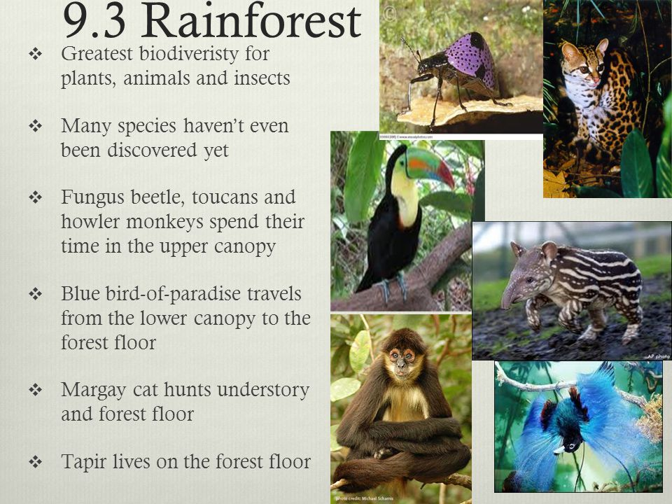 9.3 Rainforest Greatest biodiveristy for plants, animals and insects