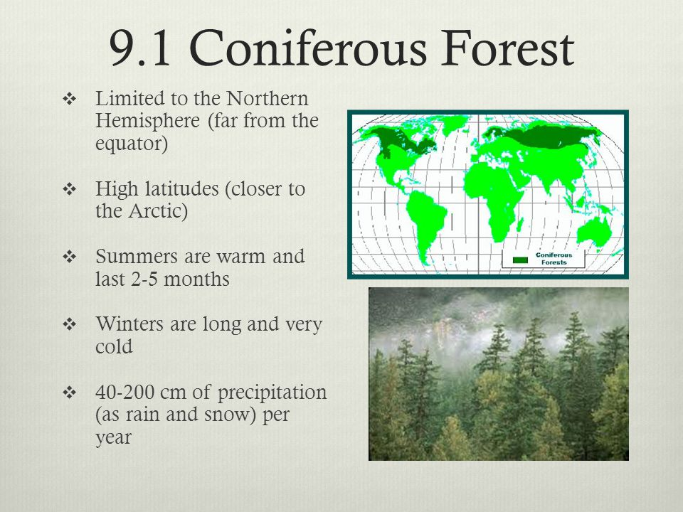 9.1 Coniferous Forest Limited to the Northern Hemisphere (far from the equator) High latitudes (closer to the Arctic)