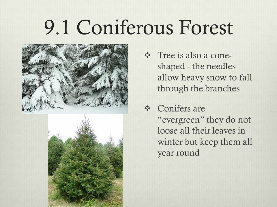 9.1 Coniferous Forest Tree is also a cone- shaped - the needles allow heavy snow to fall through the branches.