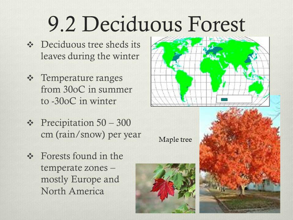 9.2 Deciduous Forest Deciduous tree sheds its leaves during the winter