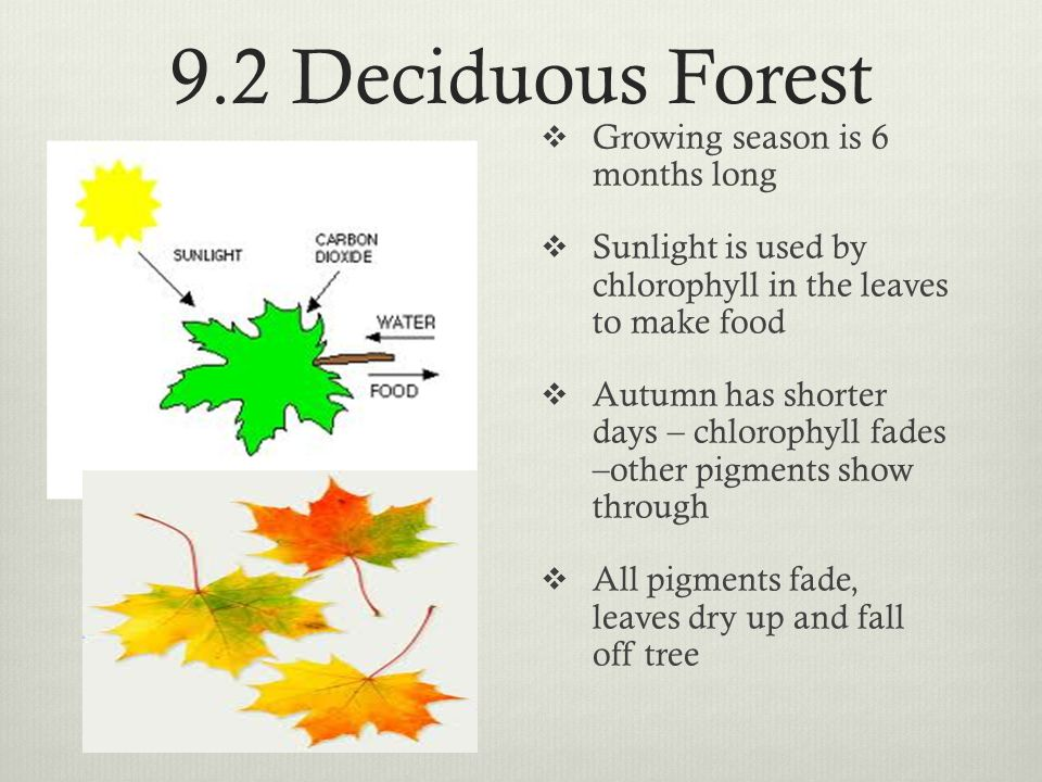 9.2 Deciduous Forest Growing season is 6 months long