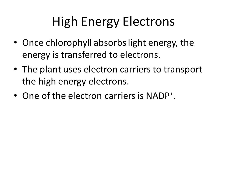 High Energy Electrons Once chlorophyll absorbs light energy, the energy is transferred to electrons.