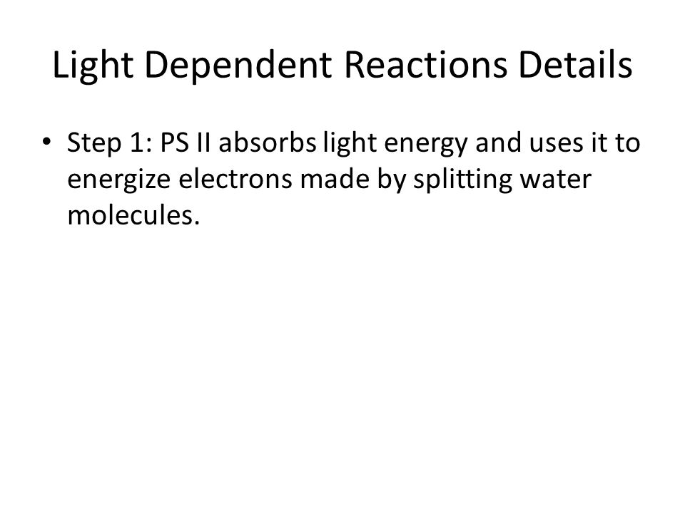 Light Dependent Reactions Details