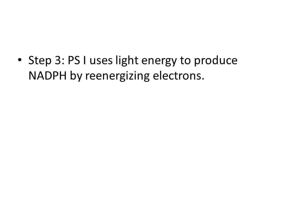Step 3: PS I uses light energy to produce NADPH by reenergizing electrons.
