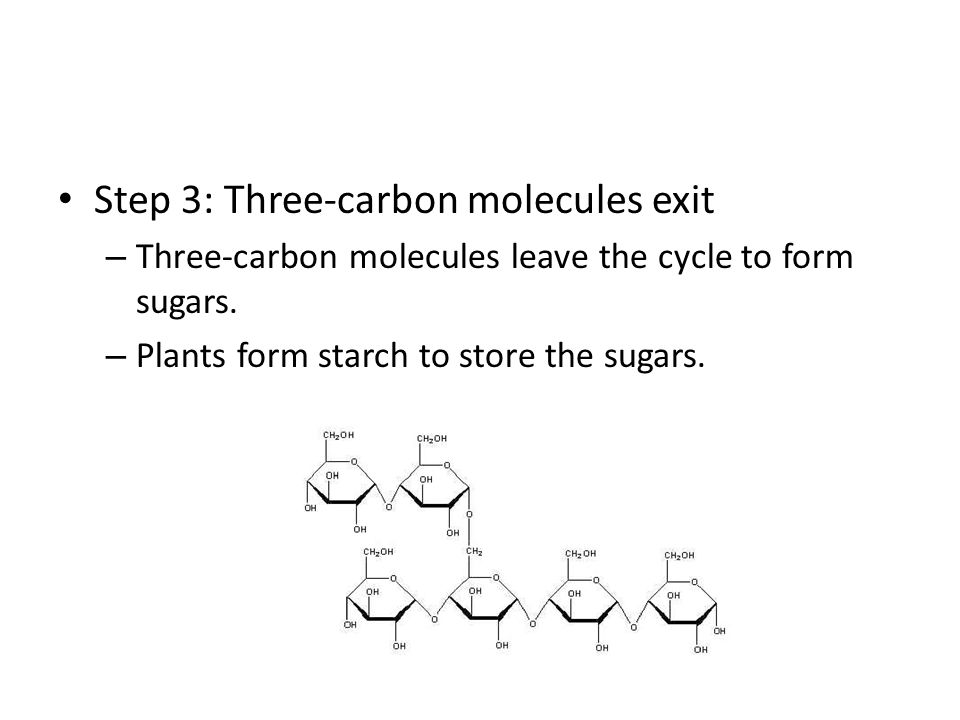 Step 3: Three-carbon molecules exit