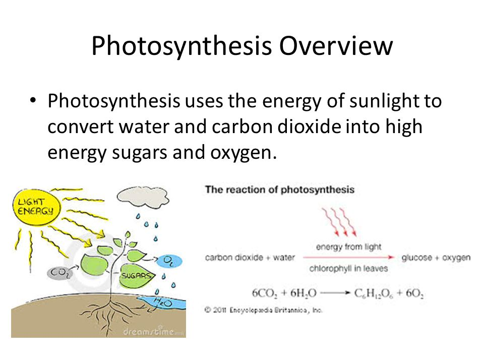 a photosythesis Photosynthesis is the process where phytoplankton uses sunlight to convert carbon dioxide into food and release oxygen as a by-product photosynthesis is driven by sunlight.