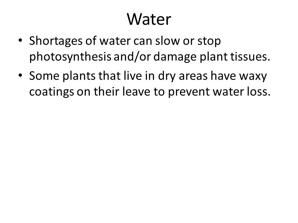 Water Shortages of water can slow or stop photosynthesis and/or damage plant tissues.