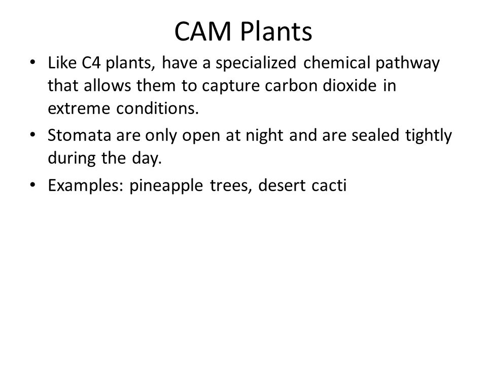 CAM Plants Like C4 plants, have a specialized chemical pathway that allows them to capture carbon dioxide in extreme conditions.