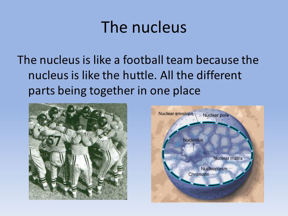 The nucleus The nucleus is like a football team because the nucleus is like the huttle.