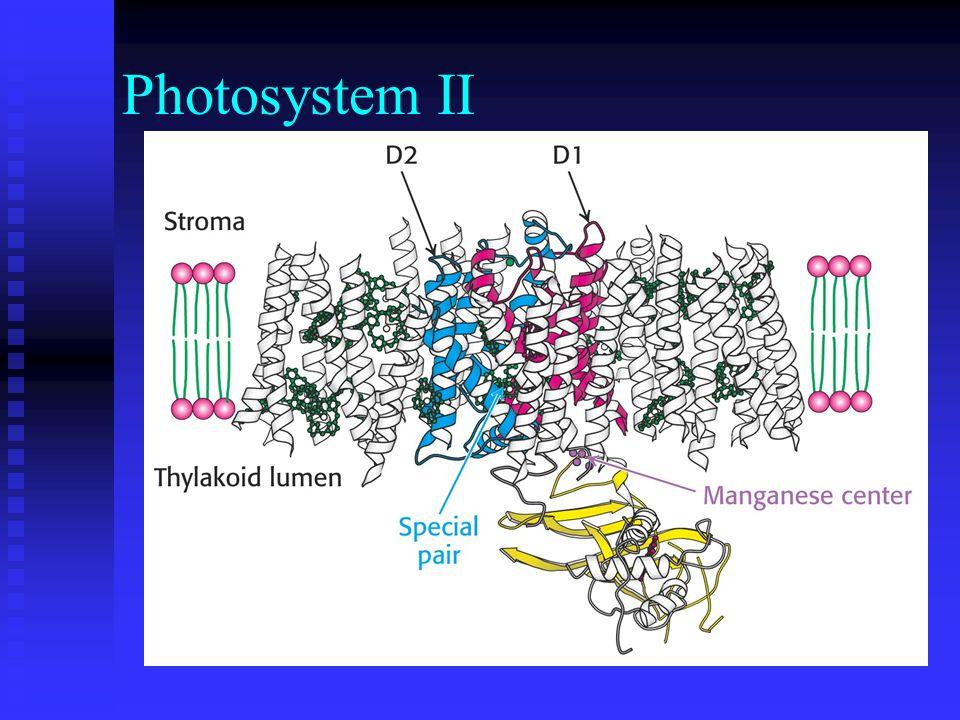 Photosystem II