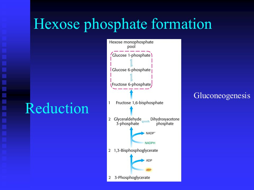 Hexose phosphate formation