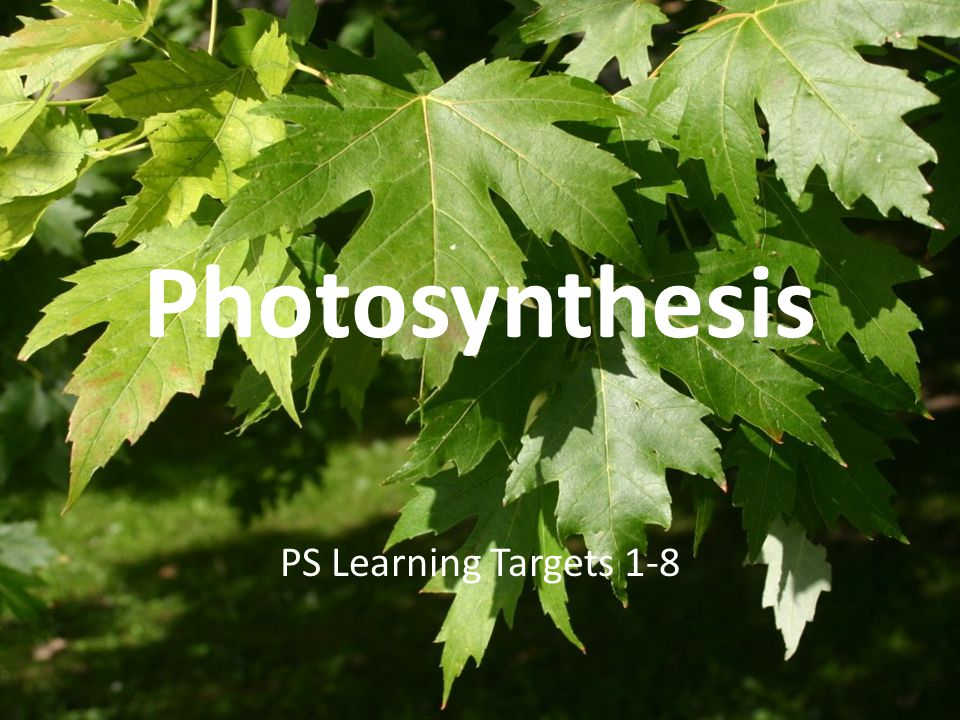 Photosynthesis PS Learning Targets 1-8