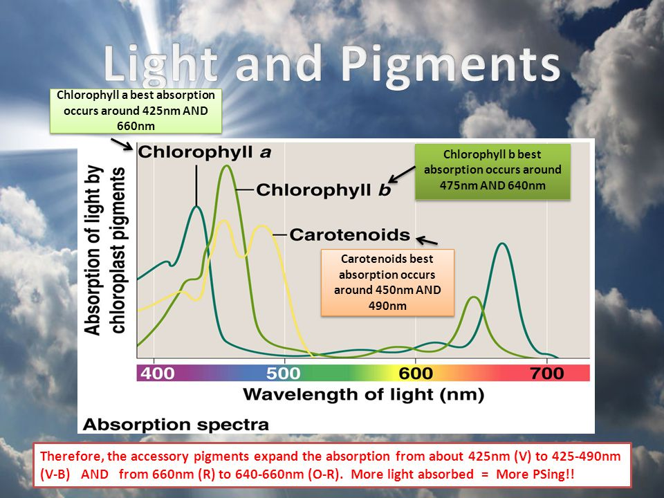 Light and Pigments Chlorophyll a best absorption occurs around 425nm AND 660nm. Chlorophyll b best absorption occurs around 475nm AND 640nm.