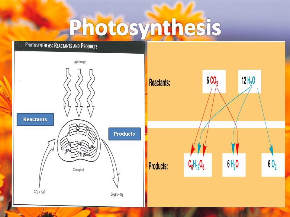Photosynthesis Reactants Products