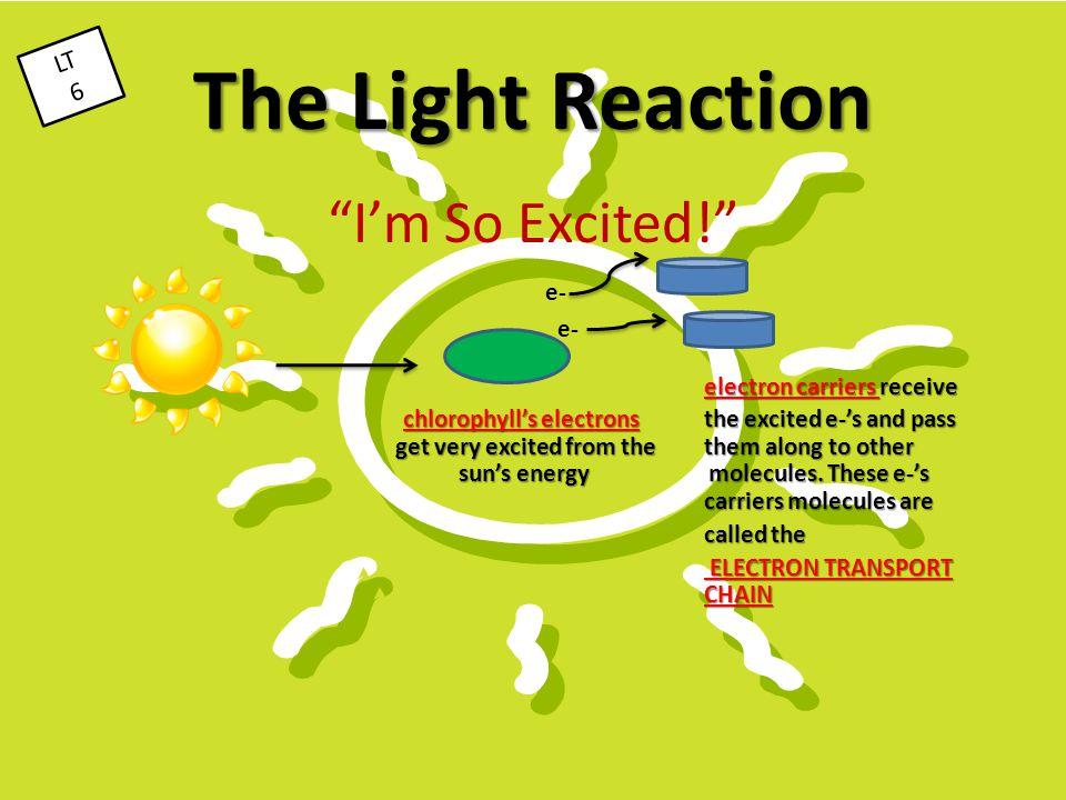 The Light Reaction I'm So Excited! e- LT 6