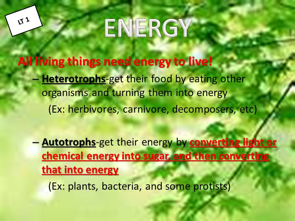 ENERGY All living things need energy to live!