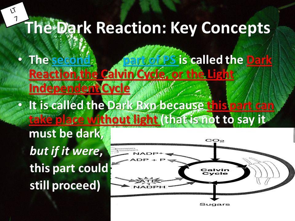 The Dark Reaction: Key Concepts