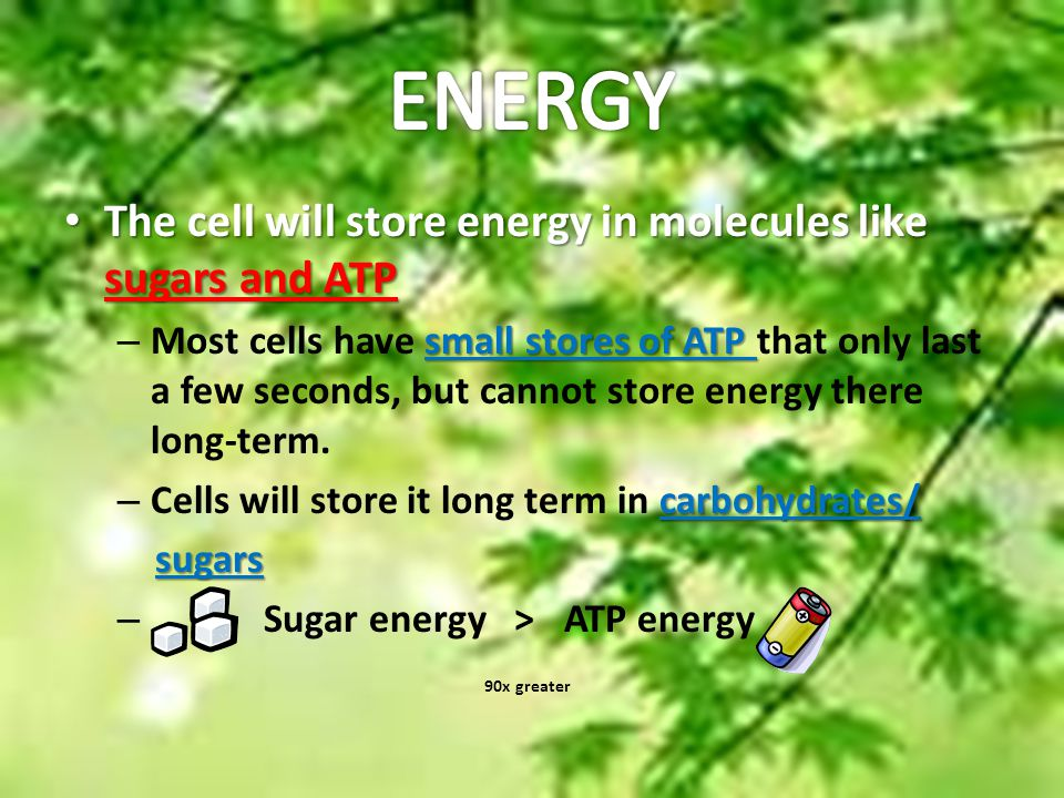 ENERGY The cell will store energy in molecules like sugars and ATP