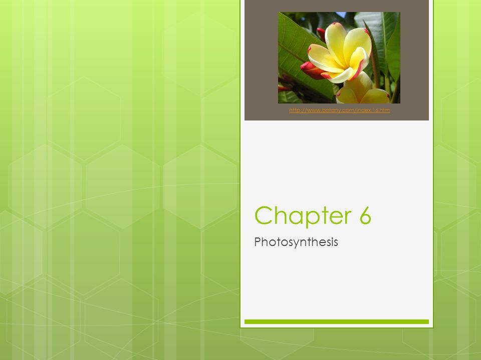 http://www.botany.com/index.16.htm Chapter 6 Photosynthesis