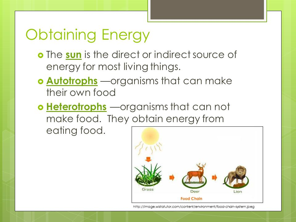 Obtaining Energy The sun is the direct or indirect source of energy for most living things. Autotrophs —organisms that can make their own food.