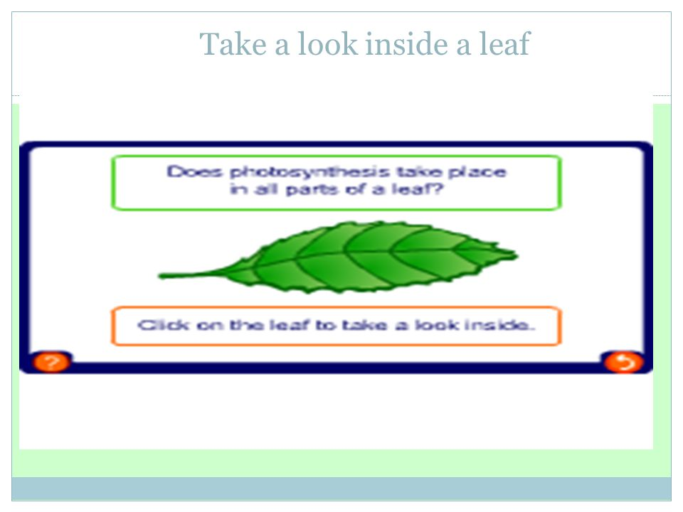Take a look inside a leaf