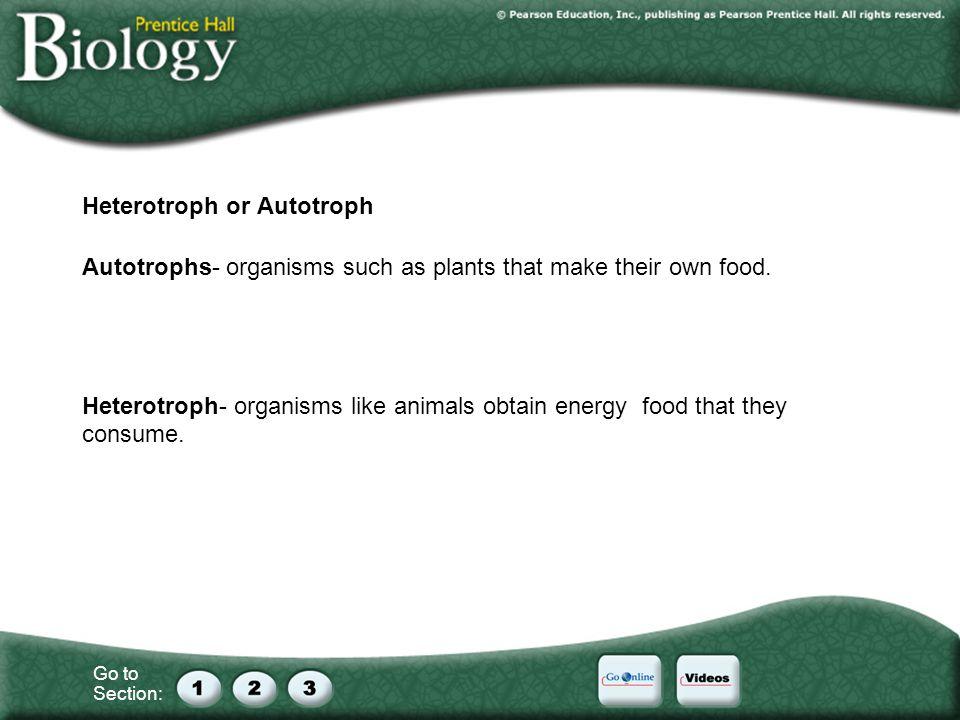 Heterotroph or Autotroph
