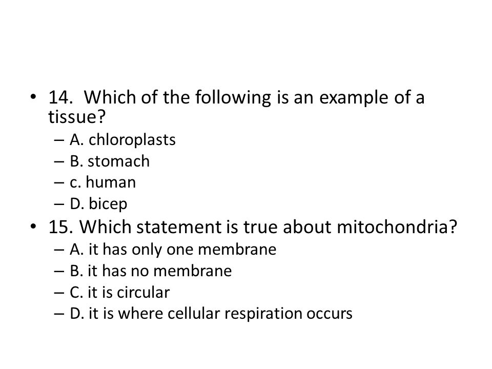 14. Which of the following is an example of a tissue