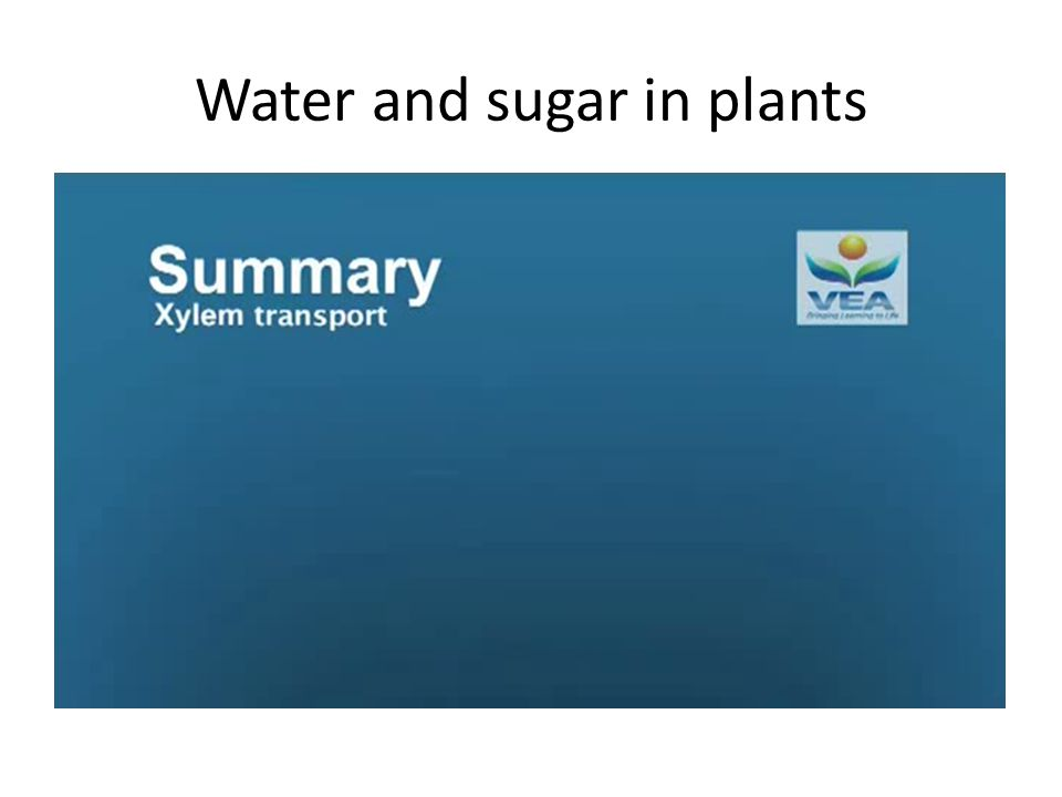 Water and sugar in plants