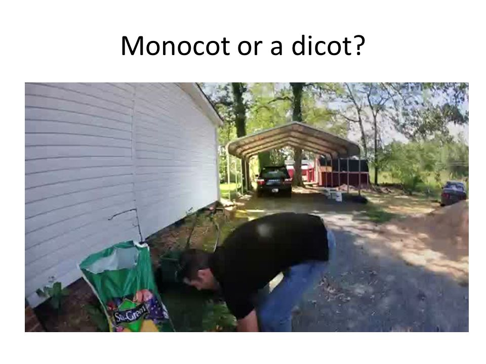 Monocot or a dicot