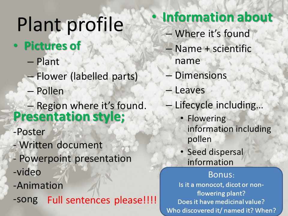 Plant profile Information about Presentation style; Pictures of