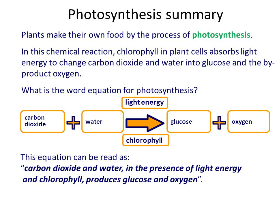 photosynthesis summary Photosynthesis photosynthesis is the process by which organisms that contain the pigment chlorophyll convert light energy into chemical energy which can be stored in.